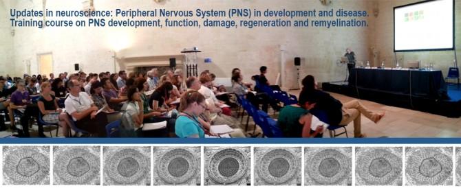 In corso la Summer School del Dhitech sulle Neuroscienze
